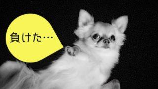 アンダードッグ(負け犬)効果のイメージ